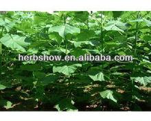 Paulownia Elongata Seed For Planting