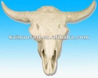 Decorative resin animal skull