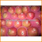 Fresh Red Fuji Apple and Fruit 2013