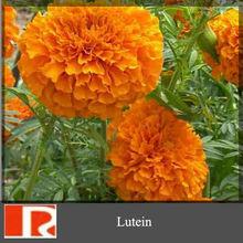 Extrato de Marigold 5% - 80% luteína, Zeaxantina, Xanthin