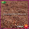 yanshan montagne 2014 nouvelle récolte frais marrons chinois à vendre