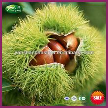 2014 migliore organico cinese fresco in vendita