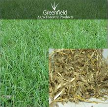 Dinanath grass seeds ( Pennisetum pedicellatum )