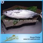 Fish Frozen Whole Round Fresh Tuna Skipjack