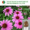 Organic Echinacea Extract/Echinacea Purpurea Extract/Polyphenols 4%/Chicoric HPLC