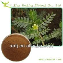 20% Saponins Natural tribulus extract powder