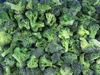 we sell frozen broccoli floret 30-50mm through BRC certificate
