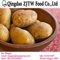 di patate di patate da semina holland