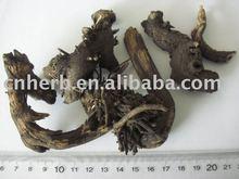 Rhizoma Cimicifugae/ black cohosh