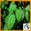 Natural Plant Extract Epimedium Extract Icariin 98% HPLC