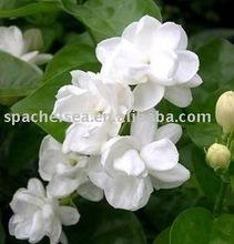 sensitive skin pure jasmine aroma essential oil for bulk goods