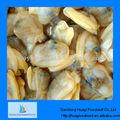 Congelado cozido carne de molusco