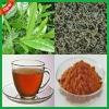 pure Black tea extract powder 20% 40% theaflavins