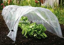 vegetable growing greenhouse