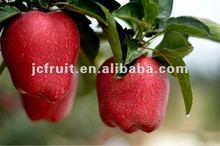 Sweet Huaniu apple