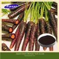 100% extrait naturel de plantes extrait de carotte noire