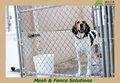 Grossista china popular inox dog cage( fabricante)