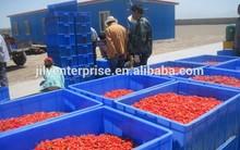 high quality goji extract/ningxia dried goji berries/certified organic goji berry