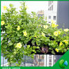Greenbar Strawberry wall planting bag, wall planter