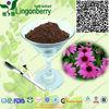 Echinacea Purpurea Extract Cichoric Acid 2%~4% GMP Factory