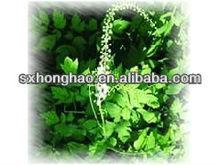 Pure Natural 2.5%/5% Cimicifugae racemosae rhizome extract