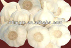 Pure white garlic 2014