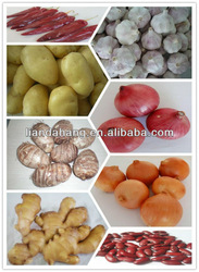 GAP/ KOSHER/ HALAL Natural Peeled Garlic for USA, EURO, Japan Market