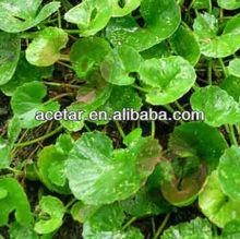 Gotu Kola Extract,asiaticoside