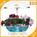 semi di seasame vaso di fiori