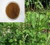Pure Natural Black Cohosh Root P.E