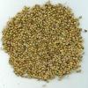 Good Quality Coriander Seed
