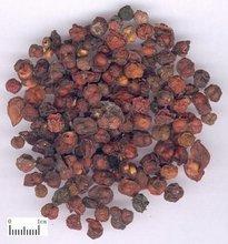 Fructus Schisandrae Chinensis Chinese herbs