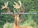 velvet deer antler Extract powder
