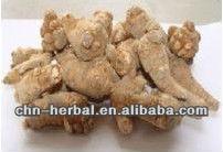 Organic Certificate Radix Notoginseng Extract Powder