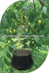 Organic Pesticide Neem Oil