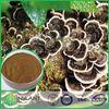 Competitive prices Hot sale natural pure Advantages of coriolus versicolor polysaccharide 40% Polysaccharides