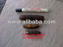 Dried Sea Cucumber GOSOK