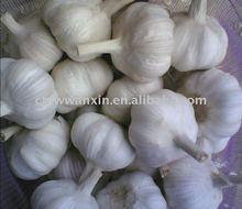 fresh vegetables garlic