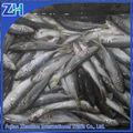 mer congelés de poisson chinchard