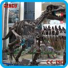 fiberglass dinosaur skull museum replicas Triceratops