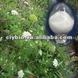 2012 hot sale hight quality Common cnidium fruit extract with Osthole98%