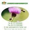 herb medicine Milk thistle extract