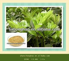 Top Quality 10:1 Polygonatum Odoratum Druce P.E.