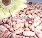 Light speckled kidney bean Long shape