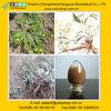 Trifolium Pratense L. extract 10:1