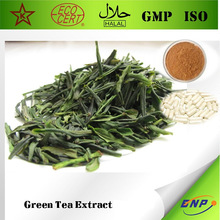 BNP Supply Top High Quality New 100% Natural Green Tea Extract Polyphenols and EGCG