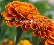 GMO free Marigold extract