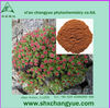 20% Isoflavones red clover extract