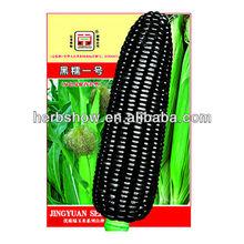 Black Red Purple White Corn seed/field corn seed/sweet corn seed for growing