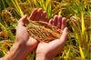 Natural Kayaminori biological pesticides 0.15%SP